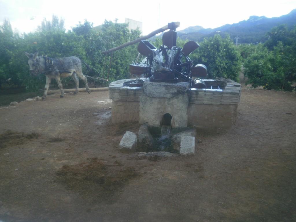 La noria de L'Hort de Muntanya, un referente en la historia de LaMejorNaranja - Con el burrito