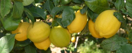 Limones de LaMejorNaranja