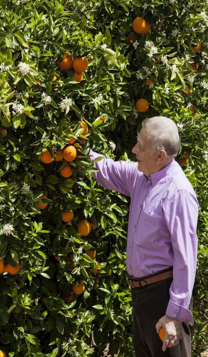 Proceso de maduración de las naranjas de LaMejorNaranja