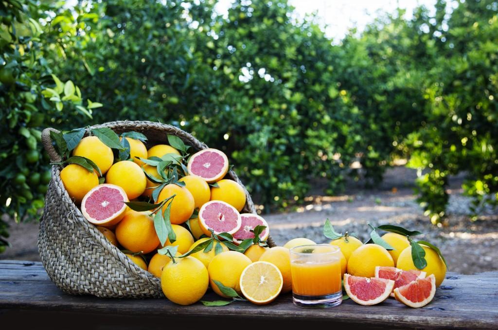 Cesta de pomelos y naranjas en nuestros campos