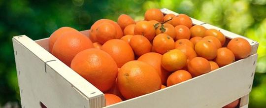 Mandarinas de LaMejorNaranja