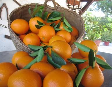 10 Razones para comprar naranjas online por LaMejorNaranja