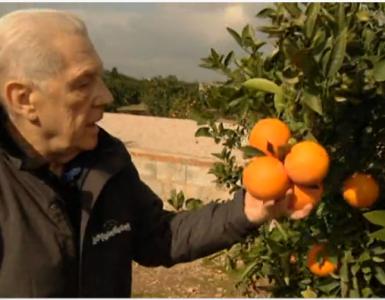Luis Serra: Yo hablo con los naranjos