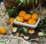 mandarinas-calabaza-la-belleza-esta-en-el-interior